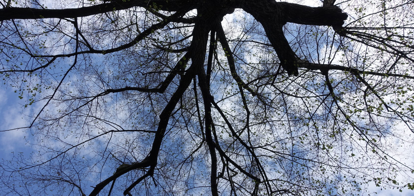 Miteinander verwurzelt – Baumpatenschaft